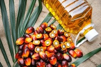2017 Hot Sale 100 % Pure Refinery Plant Crude Palm Oil suppliers