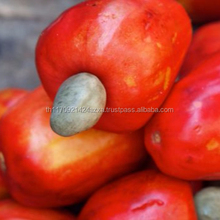 Best Quality Cashew Nut all grades available