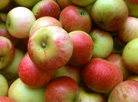 Fresh red royal gala apple fruit for sale