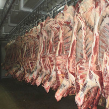 WHOLE BEEF CARCASSES / FROZEN BEEF PARTS