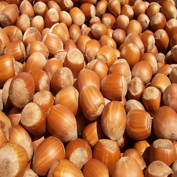 Organic raw hazelnut without shell /without shell for sale