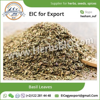 Dry Basil Leaves/ Holy Dry Basil at Wholesale Price