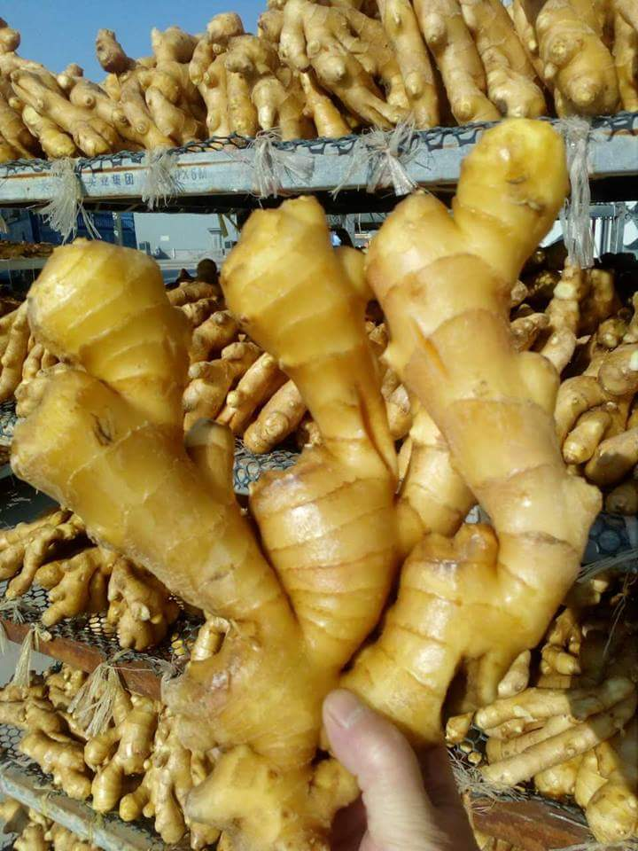 FRESH GINGER from vietnam +84963818434 whatsapp