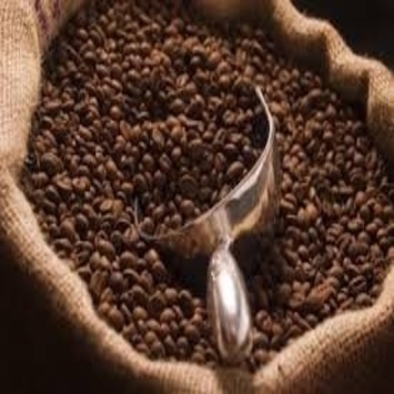 Organic Robusta and Arabic Coffee Beans/Raw Coffee Beans