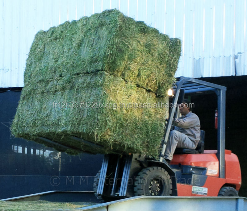 Quality Non-GMO Alfafa Hay for Animal Feeding Alfalfa / Timothy Hay and Bermuda Hay for sale