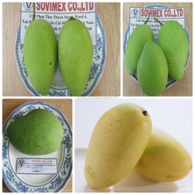 BEST QUALITY MANGO WITH GOOD PRICE