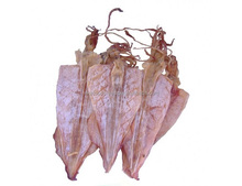 DRIED SQUID EXPORT STANDARD PRICE FOR SALE HIGH QUALITY WITH BEST PRICE FOR YOU
