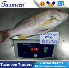 Best Quality Hot Sale Frozen Whole round Sea Bass frozen style sea frozen seafood Fish