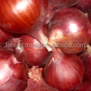 lowest price fresh onion with good brand