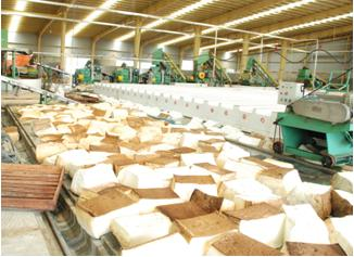 Natural Rubber Processing Factory for joint venture or corporation