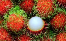 The Fresh Rambutant