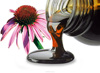 Echinacea purpurea - Concentrated extract from echinacea