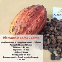 Vietnam Cocoa/Cacao/Chocolate Beans, Rich Flavor, Best Quality, New Crop, Dried