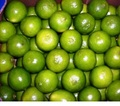 south africa best quality Fresh Limes for sale at good price
