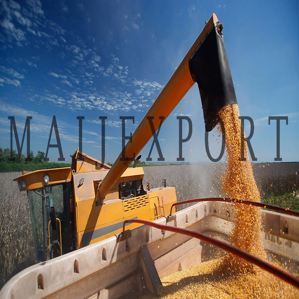 FOR SALE MILLING WHEAT GRAIN BULK FROM THE WAREHOUSE