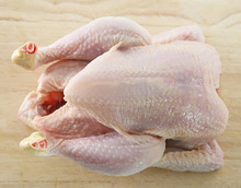TOP Brazilian Quality Halal Frozen Whole Chicken and Parts / Gizzards / Thighs / Feet / Paws / /Chicken