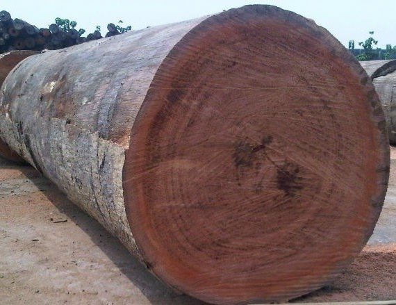 BUBINGA WOOD LOGS & BUBINGA SWAN TIMBER