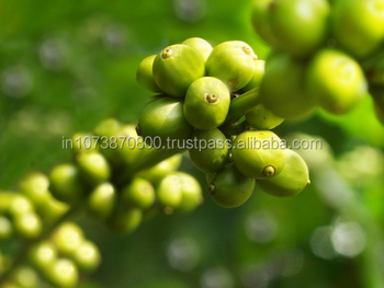 BULK ARABICA ROBUSTA GREEN COFFEE BEANS TO EUROPE