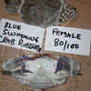 Want serious buyers for Crabs frozen Blue 3spotted crabs contact us