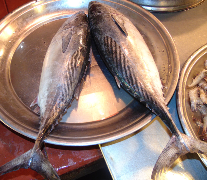 Export Quality Bangladeshi Local Tuna Fish