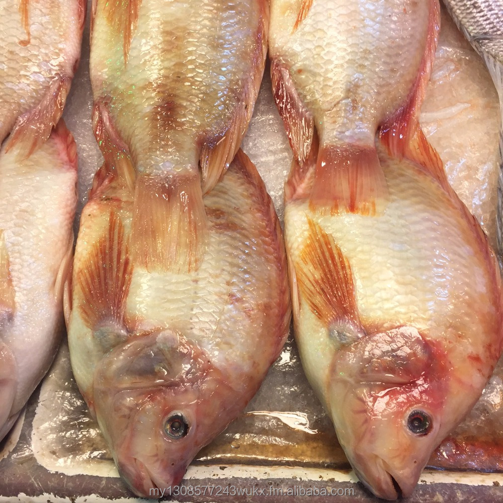 FROZEN SEA BASS , TILAPIA (RED) & GROUPER