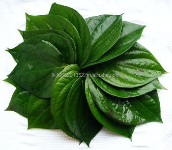 High Quality Fresh Betel Leaf Sri Lanka