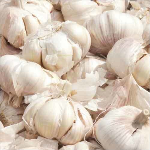 High Quality best brand natural galic fresh natural garlic with high quality