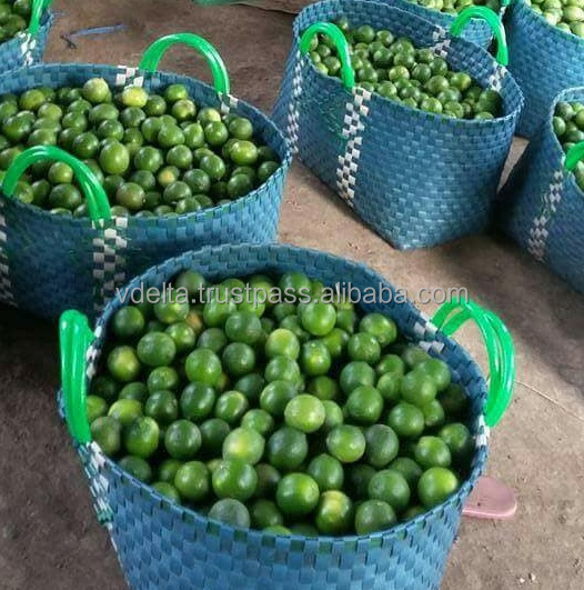 High quality fresh seedless lime - hot sale