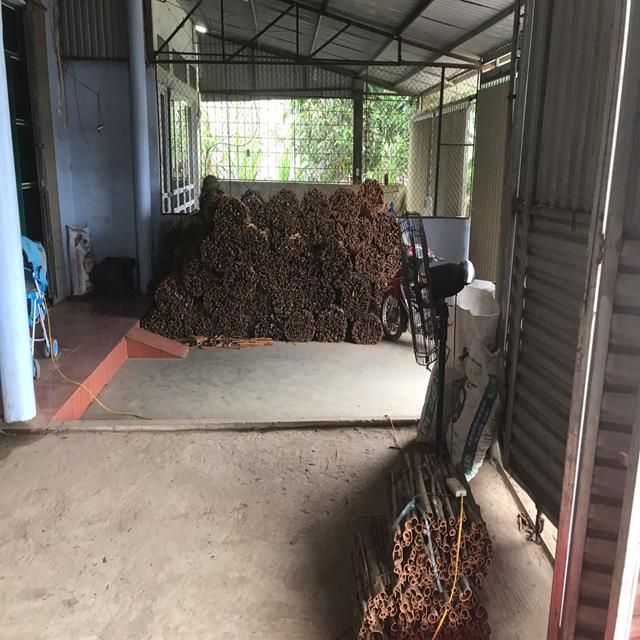 Vietnam split cassia/ split cinnamon - high quality, best price (Whatsapp: +84965556215)
