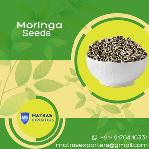 Moringa Seds Prices