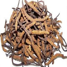 Pure Dried Cordyceps