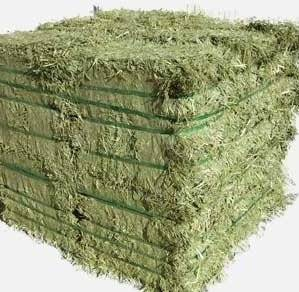 Alfalfa Hay,Timothy Hay and Bermuda Hay Now in stock