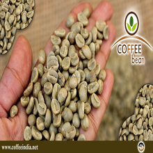 Robusta Coffee bean for export