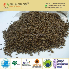Dried Mature Cassia Seed For Herbal Medicine