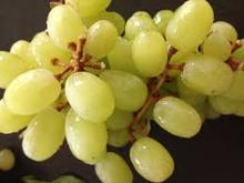 Fresh Yellow seeded and seedless Grapes