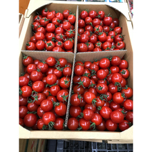Top quality fresh red cherry tomato with high quality for sale