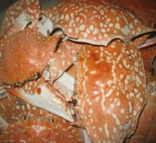 Animal feed/ Dried crab shell with BEST PRICE (whatsapp +841643571522)