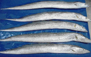Frozen Ribbon Fish best prices