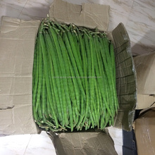 Fresh Indian Vegetables - Drumstick (Moringa oleifera)