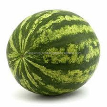 Best Quality Fresh Big Size Watermelon