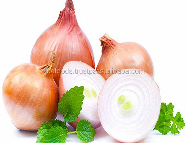 FRESH ONION- EXPORT STANDARD