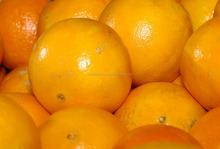 Quality Fresh Oranges for sale 30% off