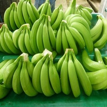 Fresh Cavendish Bananas /Green Bananas/Bananas!