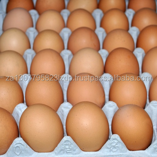 Fertile Hatching Chicken Egg