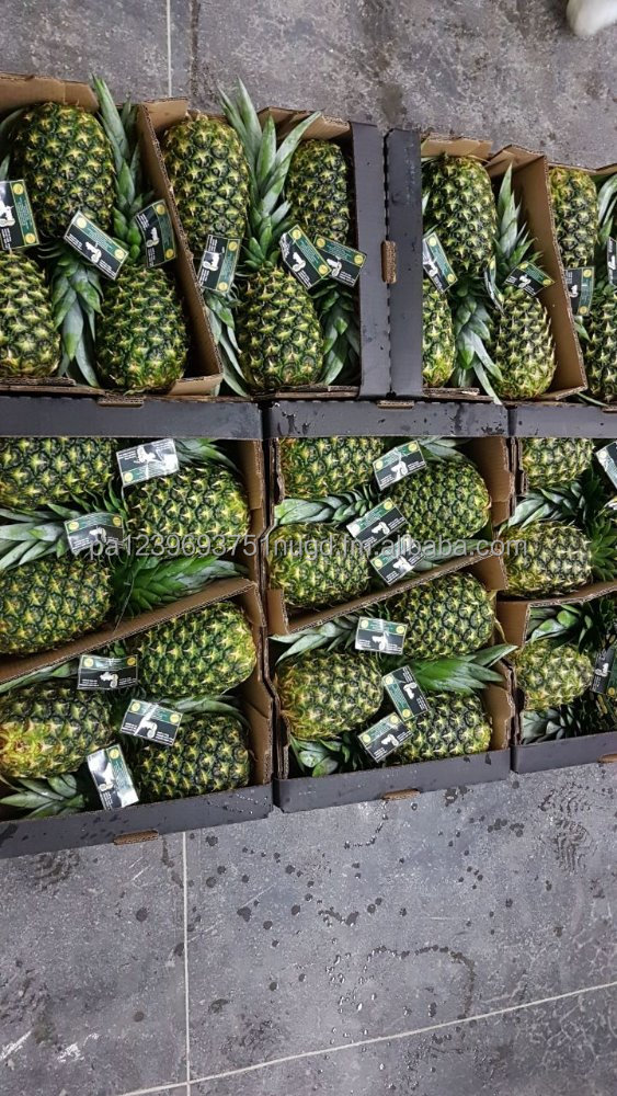 COSTAS RICA FRESH PINEAPPLE - SWEETEST IN THE WORLD