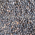 BLACK PEPPER - Whatsapp +84 907 725 131