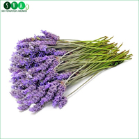 Bulk Selling Lavender Essential Oil