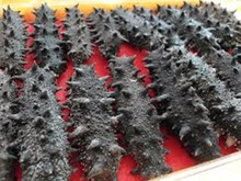 Well Dried Sea Cucumber for sale