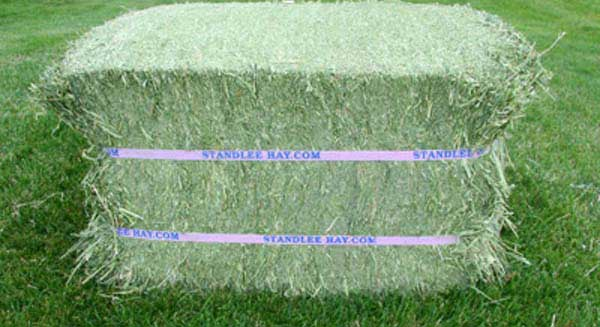Best Quality Green Alfalfa Hay For Cattles and Pigs