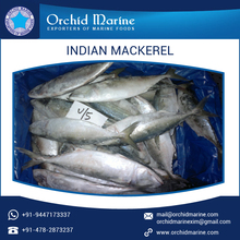 2017 New Stock Indian Mackerel Fish/ Frozen Sea Food with Best Selling Price
